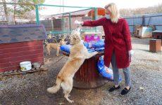 Ольга Тимофеева привезла корм в ставропольские приюты для животных