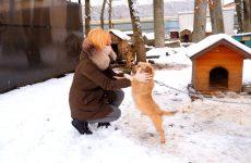Ольга Тимофеева привезла помощь ставропольскому приюту для животных